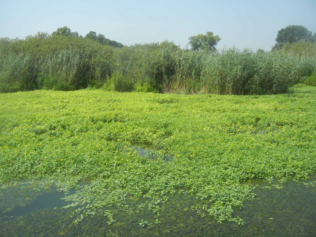 Garzaia sui laghi di Mantova
