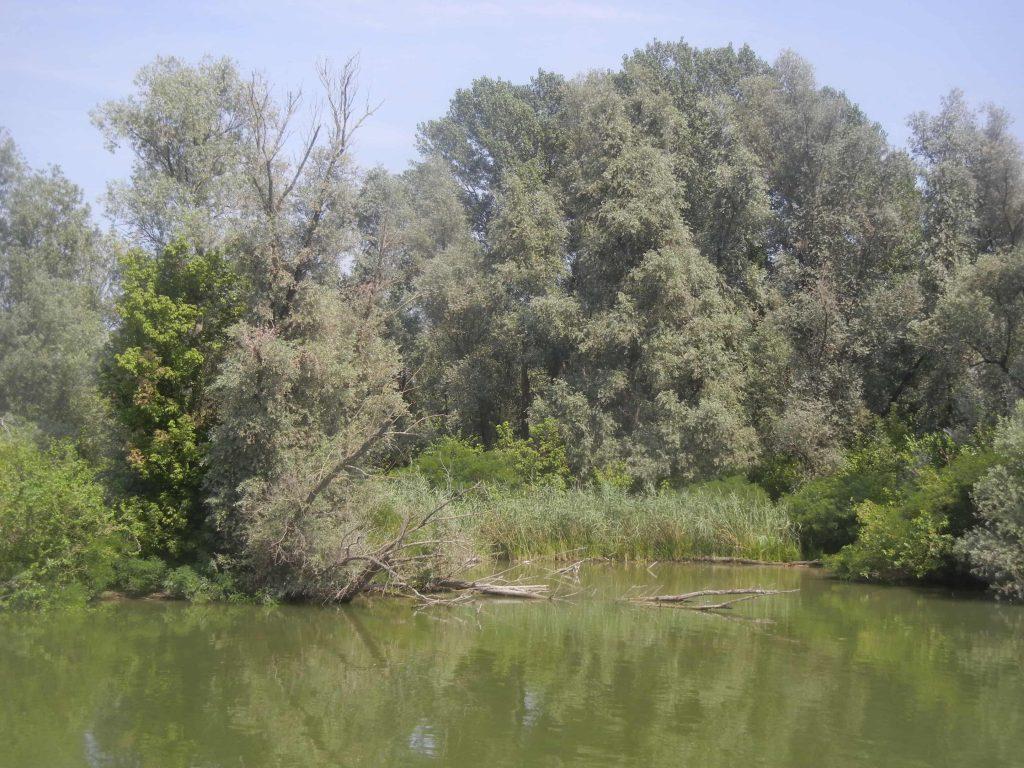 Vegetazione nel Lago Inferiore a Mantova