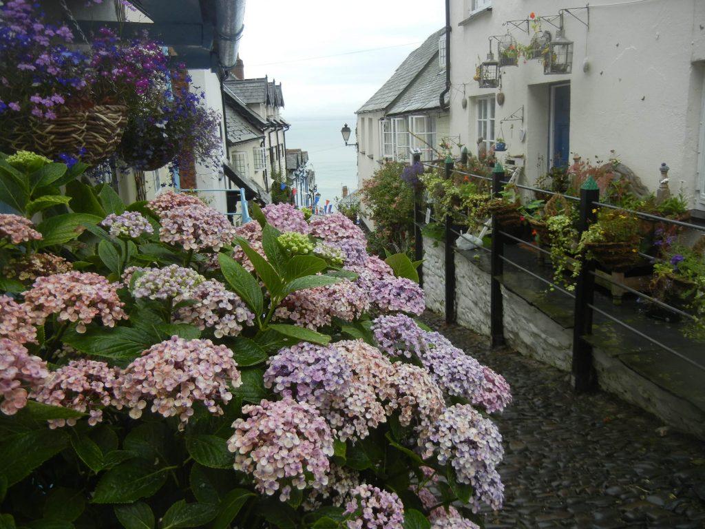 Fiori nel villaggio di Clovelly